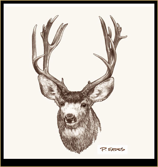 Pencil Drawings: Mule ...